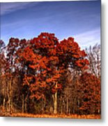 Big Red Metal Print by Thomas Young