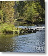 Big Trout Waiting Metal Print by Mark Messenger