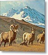 Bighorn Below Electric Peak Metal Print by Paul Krapf