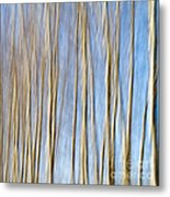 Birch Trees Metal Print by Stelios Kleanthous