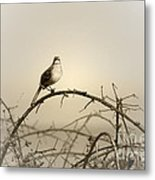 Bird In The Briar Metal Print by Artist and Photographer Laura Wrede