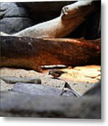 Bird - National Aquarium In Baltimore Md - 121216 Metal Print by DC Photographer