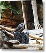 Bird - National Aquarium In Baltimore Md - 12129 Metal Print by DC Photographer