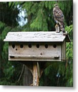 Birdhouse Takeover  Metal Print by Kym Backland