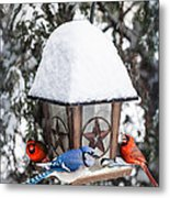 Birds On Bird Feeder In Winter Metal Print by Elena Elisseeva