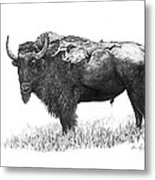 Bison Metal Print by Aaron Spong