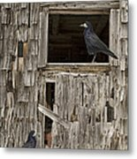 Black Crows At The Old Barn Metal Print by Edward Fielding