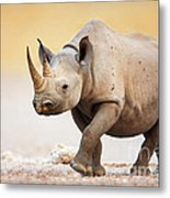 Black Rhinoceros Metal Print by Johan Swanepoel