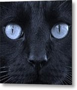 Blackie Blue Metal Print by Elizabeth Sullivan