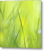 Blades Of Grass - Green Spring Meadow - Abstract Soft Blurred Metal Print by Matthias Hauser
