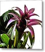 Blooming Bromeliad Metal Print by Christi Kraft