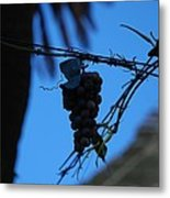 Blue Grapes Metal Print by Dany Lison