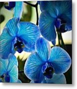 Blue Monday Metal Print by Mandy Shupp