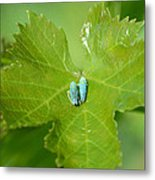 Blue On Green Metal Print by Fraida Gutovich