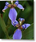 Blue Walking Iris Metal Print by Carol Groenen