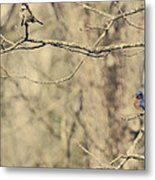 Bluebird And Sparrow Metal Print by Heather Applegate