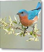 Bluebird Floral Metal Print by William Jobes