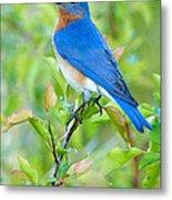 Bluebird Joy Metal Print by William Jobes