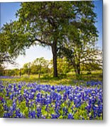 Bluebonnet Meadow Metal Print by Inge Johnsson