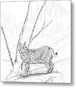 Bobcat Metal Print by Carl Genovese
