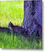 Bobcat Cubs Metal Print by Diana Berkofsky