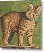Bobcat Kitten Metal Print by Crista Forest