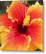 Bold And Beautiful  Metal Print by Mindy Sue Werth