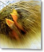Born To Fly Metal Print by Robyn King