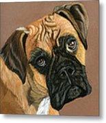Boxer Dog Metal Print by Sarah Dowson