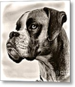 Boxer Profile Metal Print by Lana Trussell