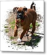 Boxer Puppy 14-1 Metal Print by Maria Urso