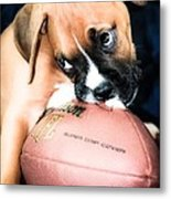 Boxer Puppy Cuteness Metal Print by Peggy  Franz
