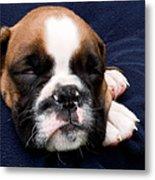 Boxer Puppy Sleeping Metal Print by Weston Westmoreland