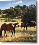 Breed Of Horses Metal Print by Carlos Caetano