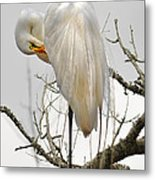 Bride Of Magnolia Metal Print by Donnie Smith