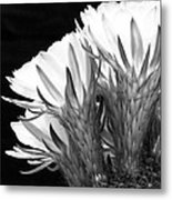 Brilliant Blossoms Diptych Left Metal Print by Kelley King