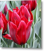 Brilliant Red Tulips In The Garden Metal Print by Jennie Marie Schell