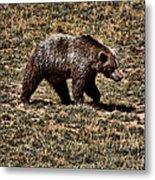 Brown Bears Metal Print by Angel Jesus De la Fuente