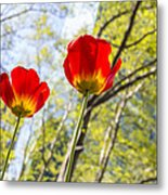 Bryant Park Tulips New York  Metal Print by Angela A Stanton
