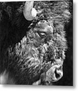 Buffalo Portrait Metal Print by Robert Frederick