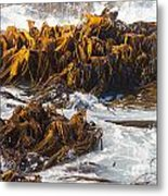 Bull Kelp Durvillaea Antarctica Blades In Surf Metal Print by Stephan Pietzko