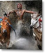 Bull Race Metal Print by Wei Seng Chen