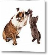 Bulldog And Kitten High Five  Metal Print by Susan  Schmitz
