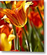 Tulips-flowers-tulips Burning Metal Print by Matthew Miller