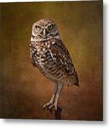 Burrowing Owl Portrait Metal Print by Kim Hojnacki