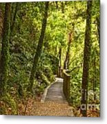 Bush Pathway Waikato New Zealand Metal Print by Colin and Linda McKie