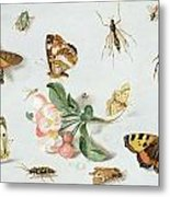 Butterflies Moths And Other Insects With A Sprig Of Apple Blossom Metal Print by Jan Van Kessel