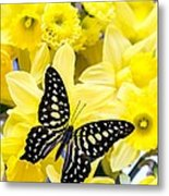 Butterfly Among The Daffodils Metal Print by Edward Fielding