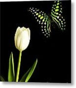 Butterfly And Tulip Metal Print by Edward Fielding