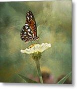Butterfly Dreams Metal Print by Kim Hojnacki